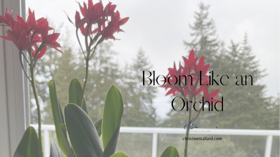 Bloom Like An Orchid